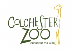 Colchester office go wild at Colchester Zoo!